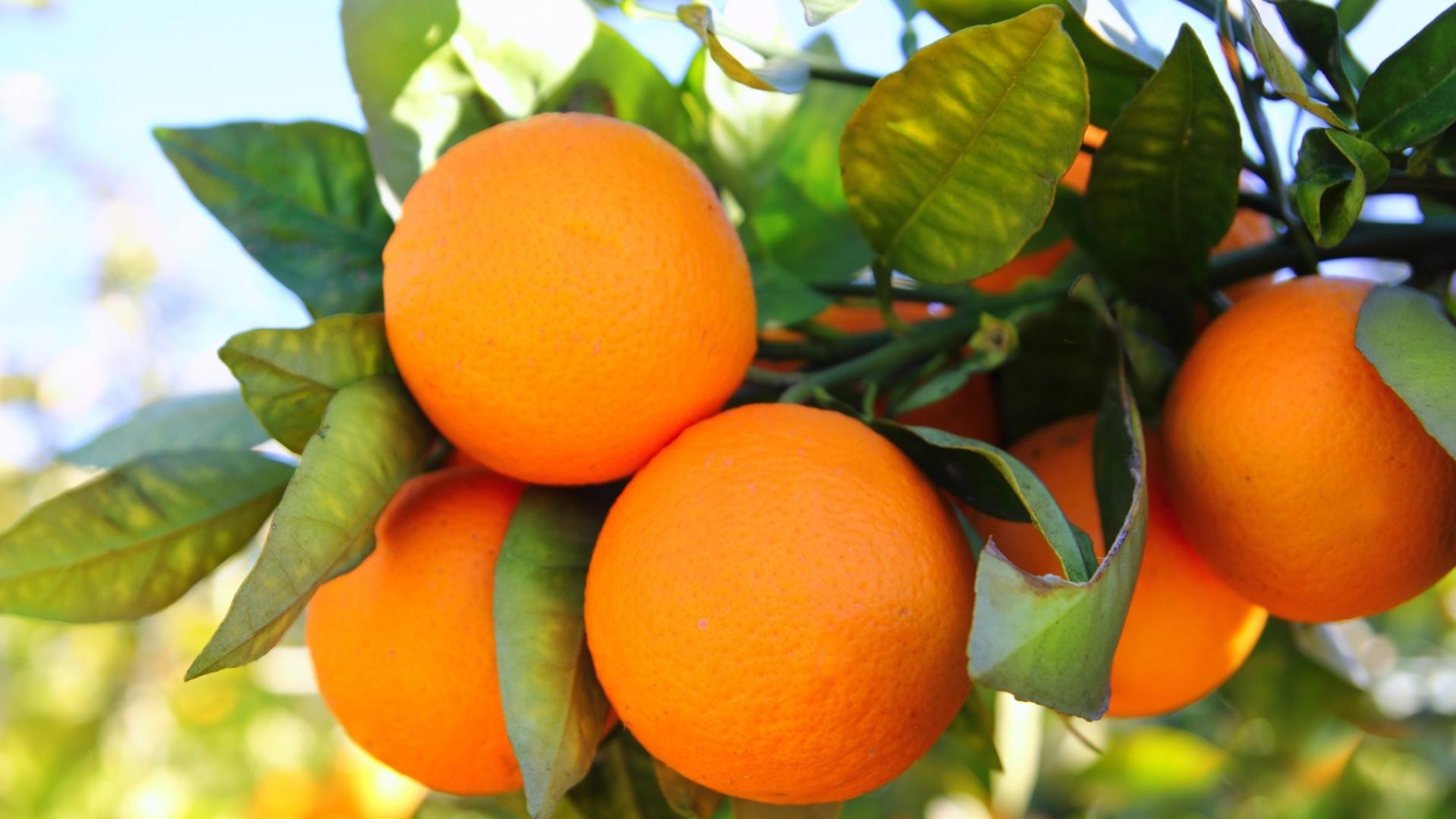Orange-Fruits