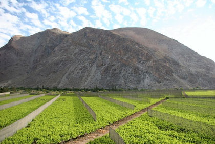 Chile-Agriculture