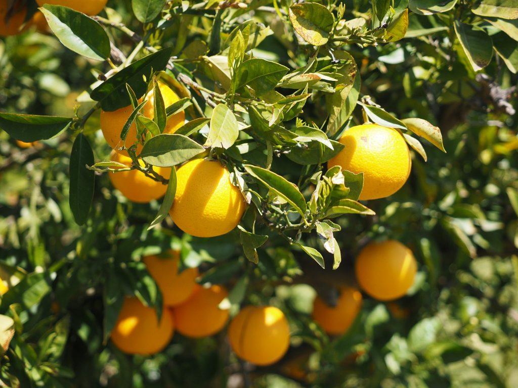 Peru 2019 Citrus export